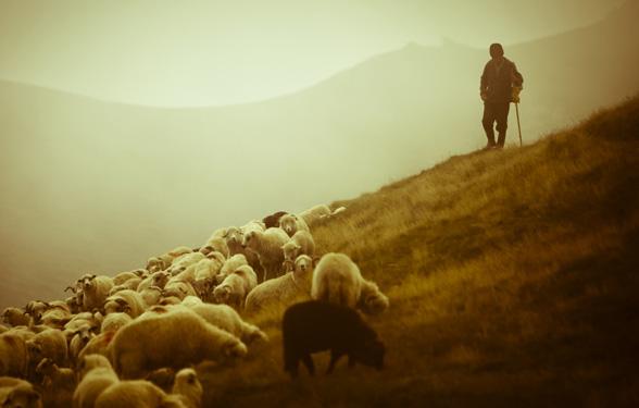 Հովիւի Բախտը