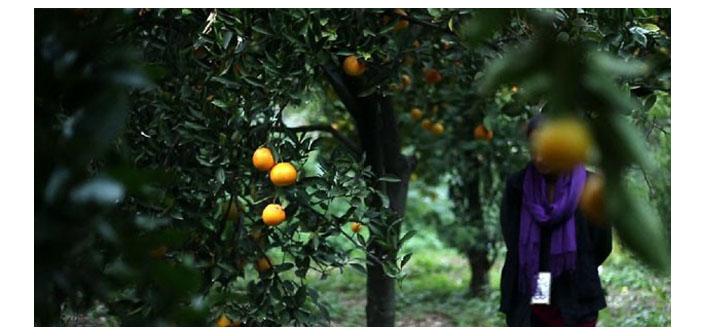 'Portakalın Uykusu' Anarad Hığutyun Binası'nda gösterilecek