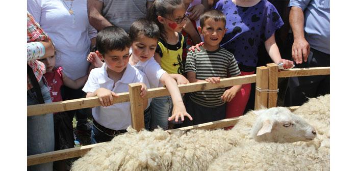 Ermenistan'da koyunların kırpıldığı bir festival
