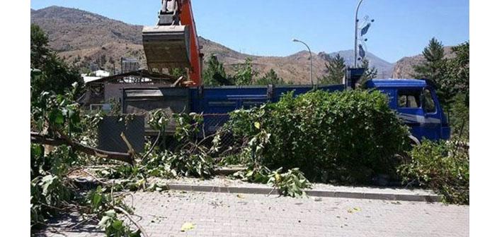Hükümet Konağı uğruna 170 yıllık ağaç kesildi
