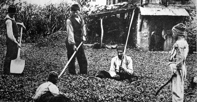 Ermenilerin fındık üretimiyle  Cumhuriyet'e katkısı hâlâ 'gizli'