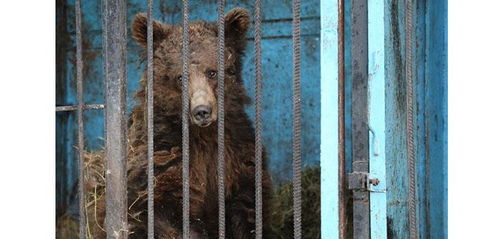 Dünyanın en hüzünlü hayvanat bahçesi