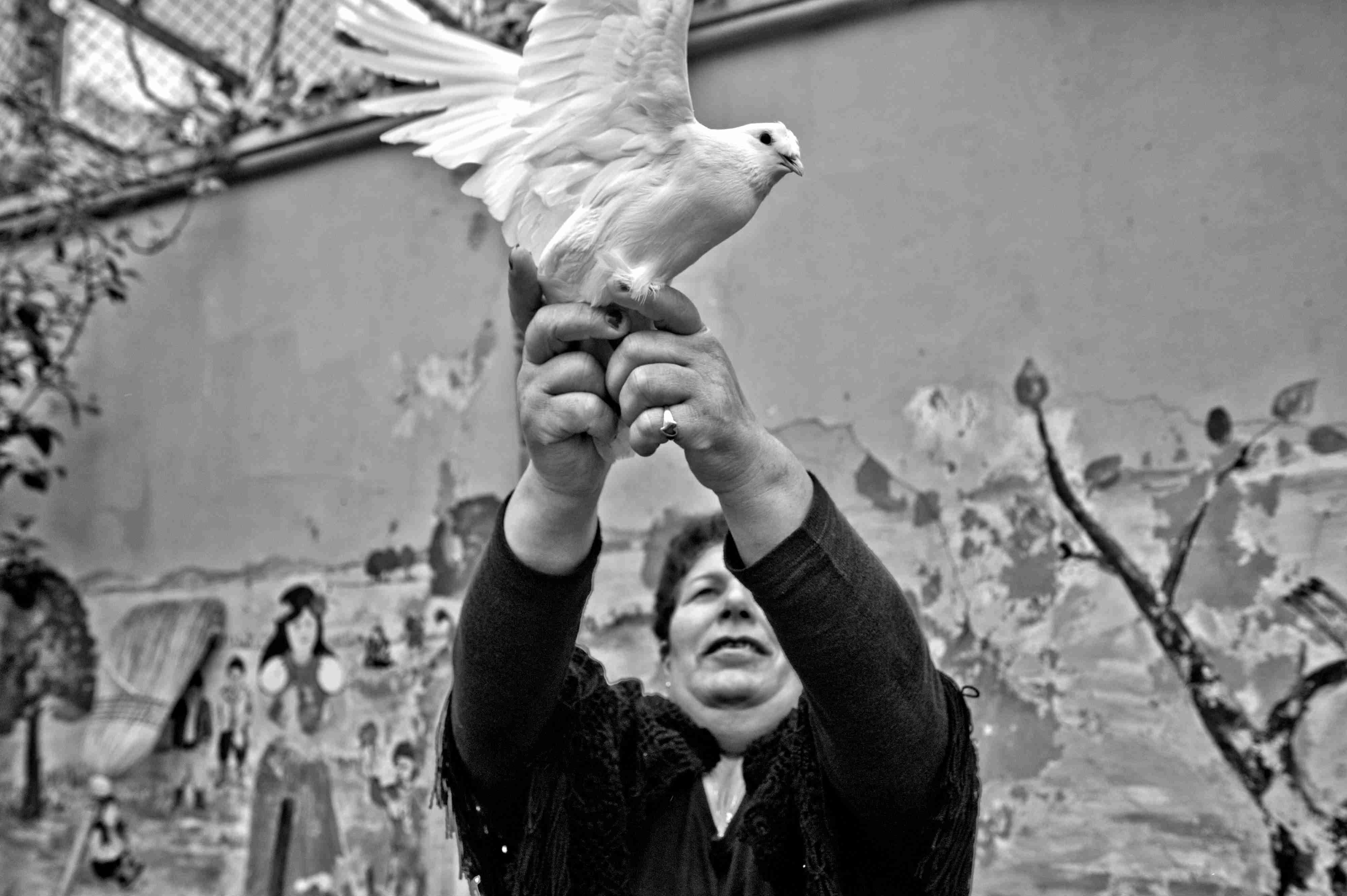 """Öjen Hanım beyaz güvercinlerden hoşlanıyor, """"İnsandan iyi vallahi, ben de kızıyordum baştan ama seviyorum şimdi"""" diyor."""