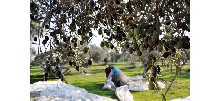 'Zeytin Tasarısı' yedinci kez Meclis'e geliyor