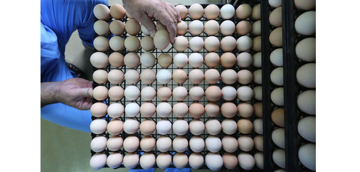 AB Komisyonu: Zehirli yumurta skandalı Türkiye dahil 40 ülkeye sıçradı
