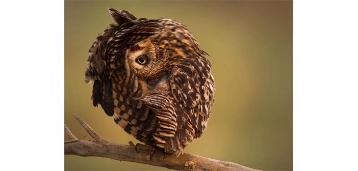 Խորհրդաւոր թռչուն մը