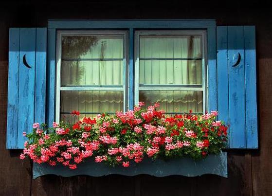 "Ermeni Turnagagası çiçeği yada ""Araglahot Haygagan"""