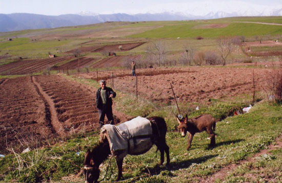 Dünya Bankası'ndan Ermenistan tarımı için 33 milyon dolar kredi