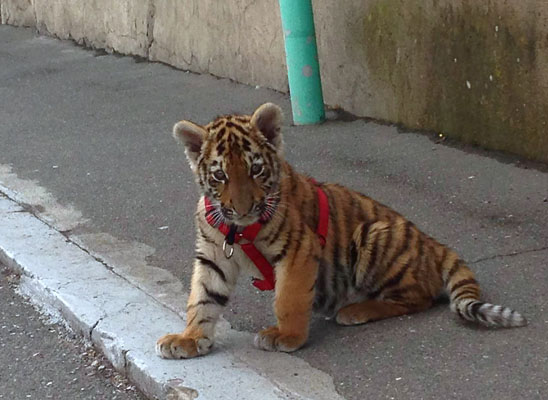 Ermenistan'da kişisel hayvanat bahçesi krizi