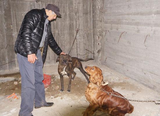 Dövüş için rehin tutulan köpekleri hayvanseverler kurtardı