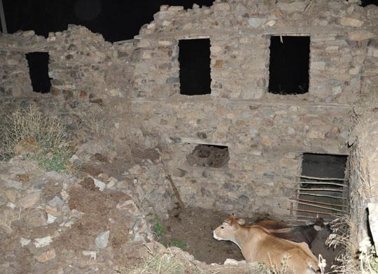 Tarihi kilise hayvan barınağı oldu